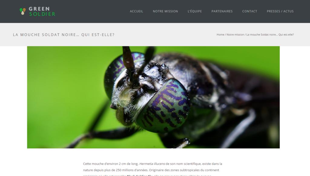 Site web 01